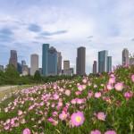 Bezoek een sportwedstrijd in Houston